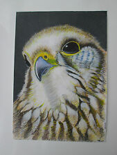 Hand drawn animal pictures, Original Contemporary KESTREL