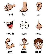 Body Parts Flash Cards Kids Preschool Autism SEN ADHD Special Needs