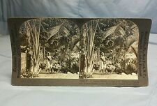 Antique Keystone Stereoview Card #25771 Native Porter Laden With Durians