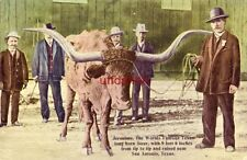 JERONIMO, WORLDS FAMOUS TEXAS LONG HORN WITH 9 FEET 6 IN. TIP TO TIP SAN ANTONIO
