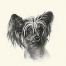 Dog Show Ring Number Clip Pin Breed - Chinese Crested