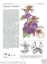 Achimenes widow's tears hot water plant / Alpinia Coccinea Prospero Alpini FICHE