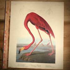 Antique JJ Audubon American Pink Flamingo Print Plate CCCCXXXI by Havell 20x16