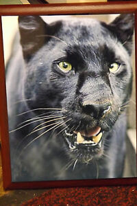 Panther picture on wall plaque , panther wall hanging , panther picture artwork
