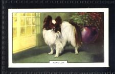 Gallaher Dogs 2nd Series 1938 - Papillon No. 19