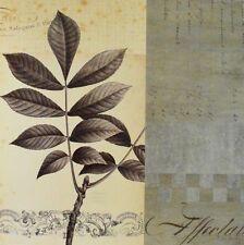 Chicago Botanic Garden Walnut Leaf Collage Poster Bild Kunstdruck 40x40cm