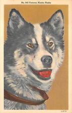 Famous Alaskan Husky Dog Alaska Postcard (c. 1940s)