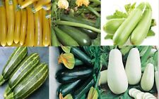 Squash Zucchini seeds 6 pack different color Heirloom Vegetable Seed
