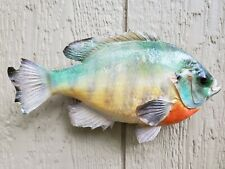 Big Real Skin Blue Gill Perch Sunfish Taxidermy Outdoor Decor