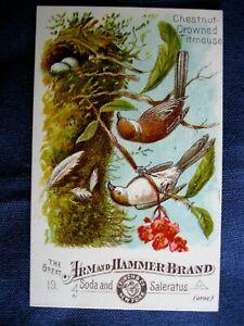 Victorian Trade Card Arm & Hammer Church #19 Chestnut Crowned Titmouse Bird 6C