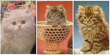 Old set lot 3 pcs Pussy Cat Kitten Pc post card unused Spain feline1980th Lovely