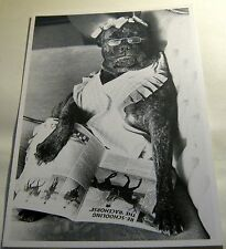 Humour Dog reading the paper Creation 6-19 - posted