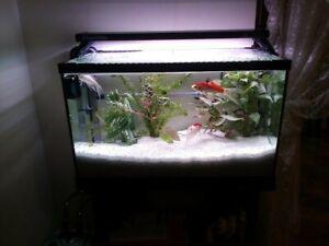Aqua One Fish Tank 600x320x300mm