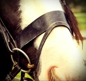 FSS Traditional Flat 5CM 2 INCH Hunter Hunt Show Cavesson Noseband Twin Buckles