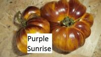 Purple Sunrise Tomate 10 Tomaten Samen neue Ernte 2020 aus bio Anbau Nr.48