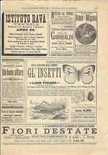 Stampa antica pubblicità VITA DEGLI INSETTI Figuier ecc. 1893 Old antique print