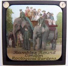 Magic Lantern Slide   Rambles Round London Zoological Gardens Elephant   (box a)