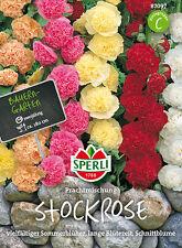 "Sperli Stockrose "" Magnífica Mezcla "" Sommerblueher,largo Período De Floración"