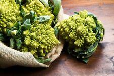 Seeds Broccoli Romanesco Beautiful Vegetable Organic Heirloom Russian Ukraine