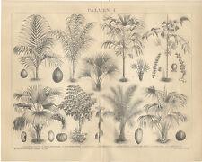 Palmiers Areca baueri Attalea funifera chamaerops excelsa peut mettre la Brockhaus 2160