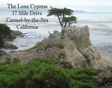 California -  LONE CYPRESS -17 MILE DR  Travel Souvenir Flexible Fridge Magnet