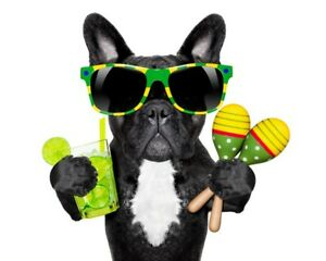 french bulldog sunglasses  canvas wall art Wood Framed Ready to Hang XXL dog