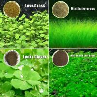 1 Bag Aquarium Water Grass Seeds Live Plant Fish Tank Decoration Landscape Seed