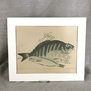 1890 Antique Hiroshige Print Japanese Study of a Fish Old Japan Art Victorian