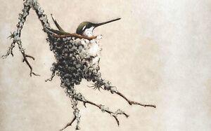 "Melanie Fain signed etching ""Nesting Hummer"" ~ Hummingbird ~ Texas artist"