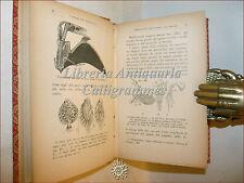 Gina Lombroso, I VANTAGGI DELLA DEGENERAZIONE 1923 Bocca Firma Autrice Illustr.