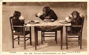 Vintage Postcard - Three Young Chimpanzees Enjoying Time At Tea Party #7036