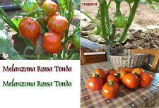 semi seeds eggplant melanzana rossa la rotonda produzione 2018 semi 100