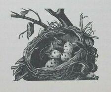 BIRD'S NEST (THRUSH) : C 1935 ART DECO Print of a Woodcut By C. LEIGHTON