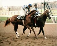SECRETARIAT - ORIGINAL 1972 8X10 CHAMPAGNE STAKES HORSE RACING PHOTO!