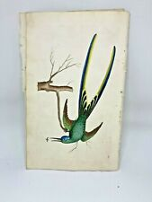Fork-tailed Hummingbird - 1783 RARE SHAW & NODDER Hand Colored Copper Engraving