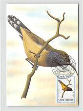 S. TOME MK 1983 oiseaux Hartlaub-Nectar Oiseau Birds CARTE MAXIMUM CARD MC cm m287/