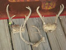 New listing Northern Wisconsin Deer Antlers for Sale!