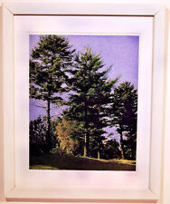 Pine Trees Grainy---  20 X 16 Framed Landscape Digital Pigment Print
