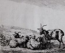 c1795 PRINT - ETCHING by SAMUEL GRANICHER - GOATS - KAREL DUJARDIN