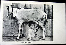 *1900's Baby Drinking From Goat Teat ~ Goat And Baby