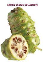 Morinda citrifolia NONI cheese exotic fruit organic MEDICINAL herb seed 25 seeds