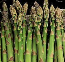 200+ MARY WASHINGTON ASPARAGUS SEEDS Organic Non-GMO U.S.Grown Seed