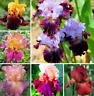 50Pcs Colorful Iris Orchids Flower Seeds Rare 5 Kind Perennial Garden Office