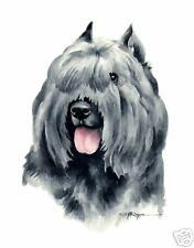 BOUVIER DES FLANDRES Watercolor DOG 8 x 10 ART Print Signed DJR