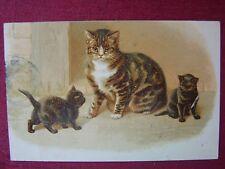 ANIMAL POSTCARD / CAT - KITTEN / 1912