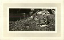 Kittens Kitty Cats & Milk Saucer Amateur Real Photo Postcard c1915