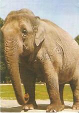 Postcard: Germany - Elefant