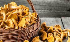 Wild - Pilze Pfifferlinge Echter Pfifferling 200 gr getrocknet  ERNTE 2019