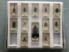 Coffret 12 Insectes Resine/inclusion