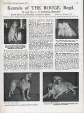 """BULLMASTIFF DOG BREED KENNEL ADVERT PRINT PAGE """"OF THE ROUGE"""" OUR DOGS 1952"""